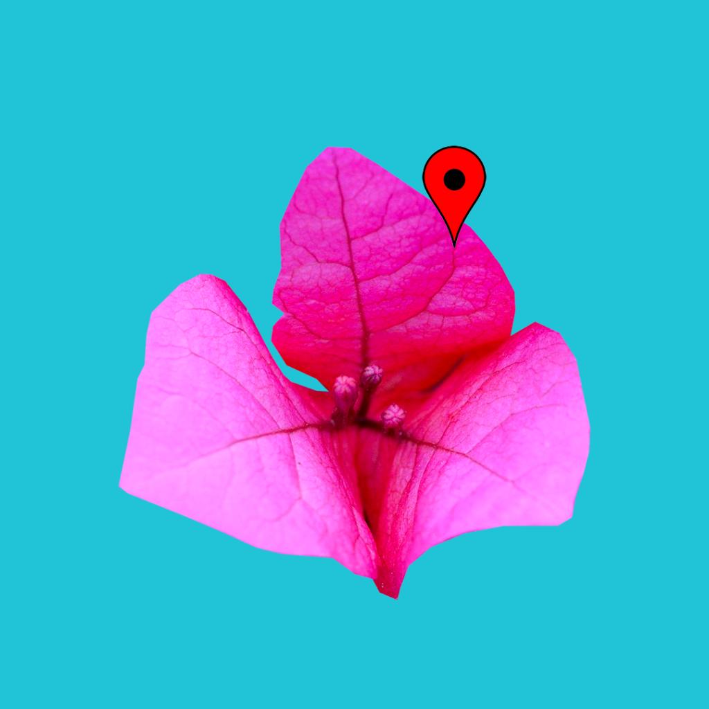cartagena colombia bougainvillaea pin map