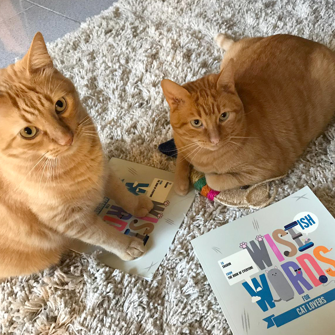 Wise(ish) Word to help Battersea | The Book of Everyone Blog